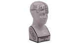 Beeld Phrenology head MG024 | Authentic Models