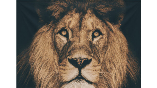 Wandkleed Portrait Lion
