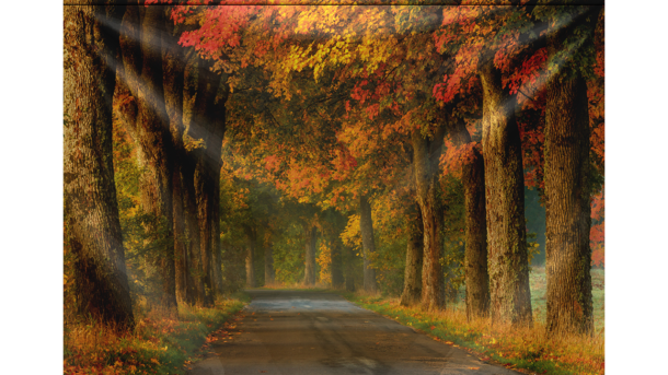 Wandkleed Winding Country Road in Autumn