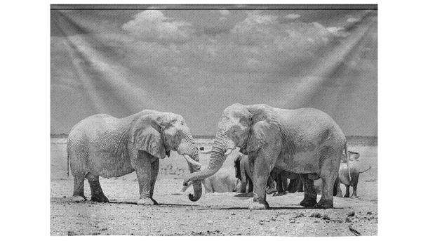 Wandkleed Mono Photo of Elephants